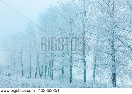 Winter Landscape, trees covered with snow, Germany