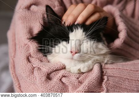 Woman Stroking Adorable Long Haired Cat, Closeup