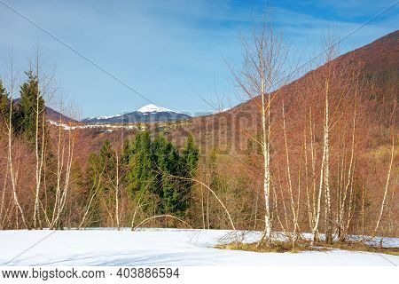 Trees On The Snow Covered Meadow In Mountains. Beautiful Winter Scenery Of Uzhanian Natural Park, Uk