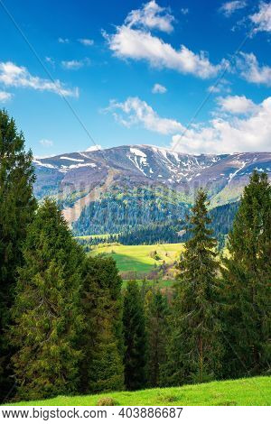 Mountain Landscape In Springtime On A Sunny Day. Trees On The Grassy Meadow. Fluffy Clouds Above The