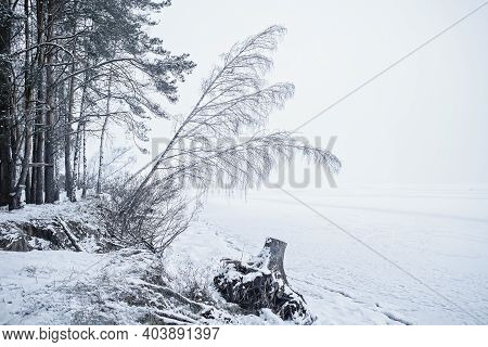 Winter Landscape With Pine Forest And Icy Frozen Lake Like A Desert, Background
