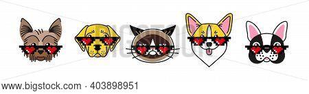 Bulldog, Corgi, Labrador, Terrier And Grumpy Cat