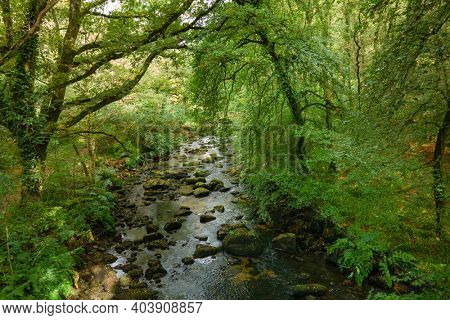 Aerial view of a temperate lush forest along the river, Sainte Barbe, Morbihan, Brittany, France