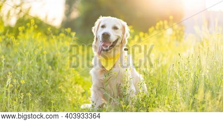 Cute dog wearing handkerchief on sunny field with flowers