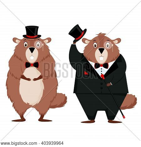 Happy Groundhog Day. Funny Groundhog Closes His Eyes, Afraid Of His Shadow. Isolated Vector Illustra