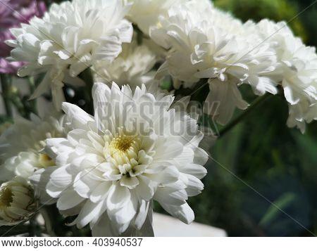 Gerbera Flower Beautiful Bouquet In Water Glass Colorful Beautiful, White Color, Barberton Daisy