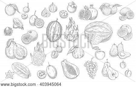Sketch Fruits Isolated Vector Icons. Durian, Watermelon And Pineapple, Peach And Papaya Farm Market