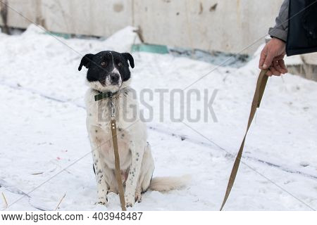 Homeless Dog In Shelter With Sad Crying Eyes, Emotional Moment, Adopt Me Concept.