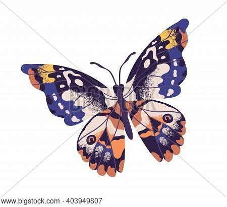 Tropical Elegant Butterfly With Colorful Wings And Antennae Isolated On White Background. Pretty Fly