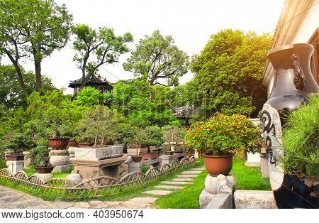 Garden of Bonsai in Humble Administrator's Garden, Suzhou, China