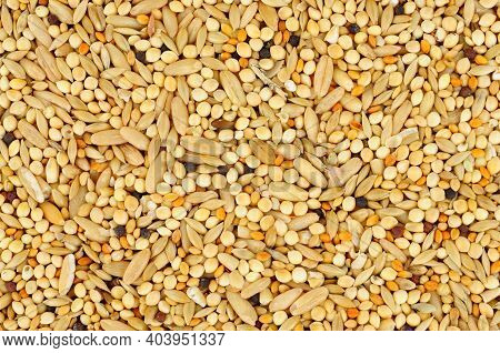 Mixed Bird Seed Texture Background With Grains And Cereals Pet Food