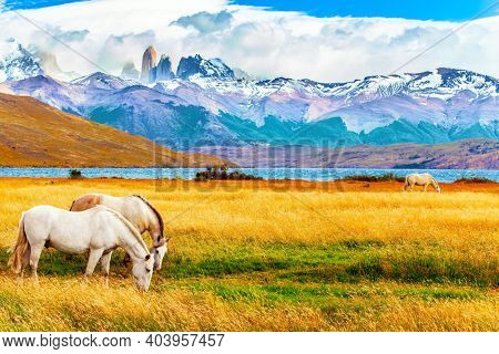 The famous Torres del Paine park in southern Chile. Gorgeous white mustangs graze in dense grass. Lagoon Azul is an amazing mountain lake near three rocks - torres.