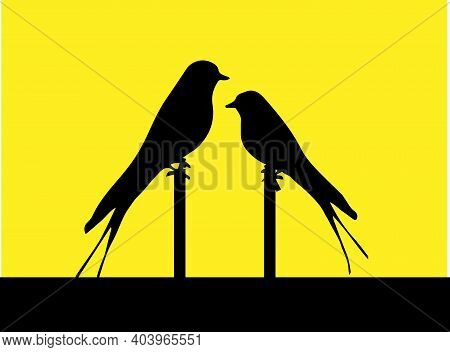 Bird Vector Illustration Isolated On Background , Sparrow, Summer, Swallow