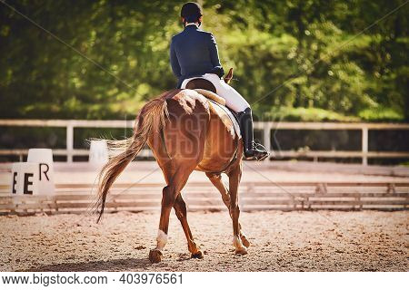 A Sorrel Horse With Long Tail That Competes In Dressage Competitions Is Ridden By A Rider In The War