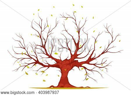 Huge Tree With Large Trunk, Bare Branches And Roots, Falling Leaves Isolated On White Background Vec