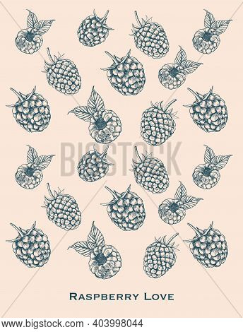 Raspberry Isolated Berry Engraved Sketch On White Background. Summer Berry Engraved Illustration Sty