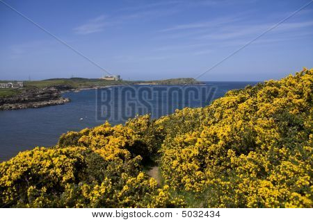 Ceamas bay and village with its harbour at low tide on the Isle of Anglesey poster