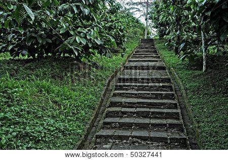 Steps at coffee plantation