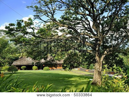 Big tree and a cottage
