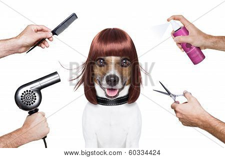 hairdresser dog ready to look beautiful at the spa poster