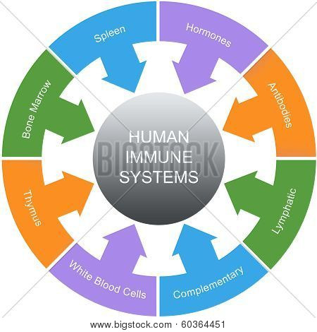 Immune System Word Circles Concept