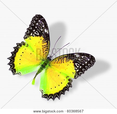 The Beautiful Flying Yellow Butterfly With Soft Shadow Isolated On White Background