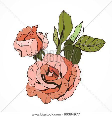 Beautiful isolated roses, peachy