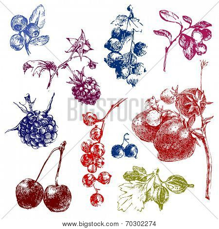 Colorful hand dawn berries over white background