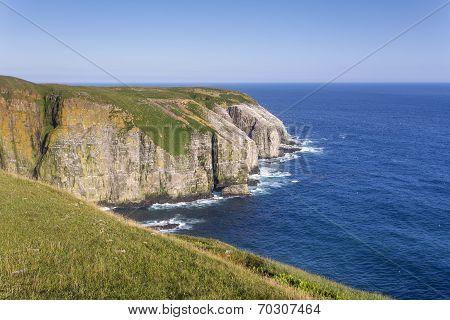 seabird sanctuary; Cape St. Mary's, Newfoundland