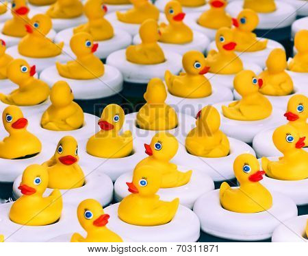 Floating Yellow Rubber Ducks