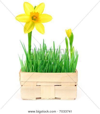 Spring In A Basket