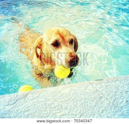 a dog out enjoying a swim in a pool toned with a soft painterly filter  poster
