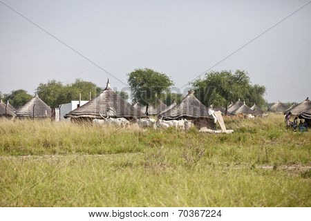 Village in South Sudan with cattle and huts