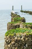 Timber groynes on the beach at the north sea Holland poster