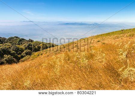 Golden Field At Kio Mae Pan Viewpoint, Doi Inthanon National Park