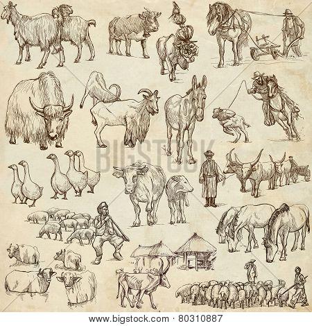 Farm Animals. Full Sized Hand Drawn Illustrations.