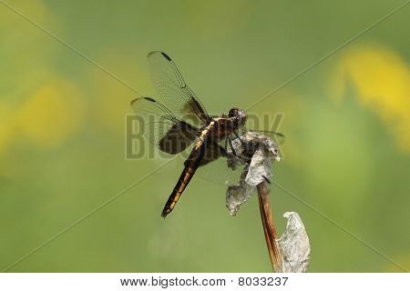 A dragonfly on a flower
