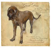 Great Dane (German Mastiff) - an hand drawn illustration (vector). Drawing comprises of three layers of lines plus colored layer the colored background is isolated. poster