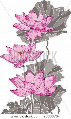 Three Pink Grey Lotus Drawing
