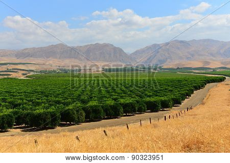 California Orange Groves