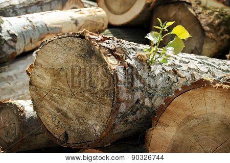 Lumbers 03