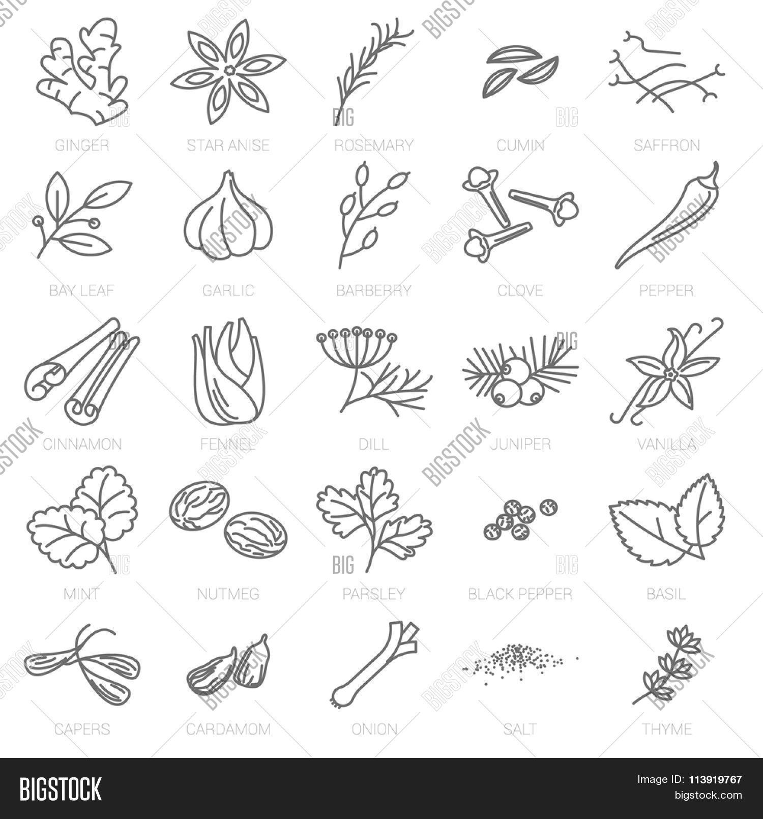 thin line spices vector icon set vector  u0026 photo