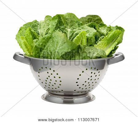 Romain Lettuce In A Stainless Steel Colander