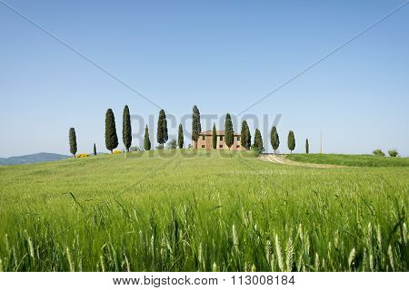 Farmhouse With Cypress Trees And Wheat In Tuscany