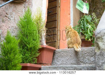 Cat Waiting Food
