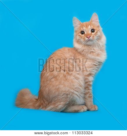 Red Fluffy Striped Cat Sittng On Blue