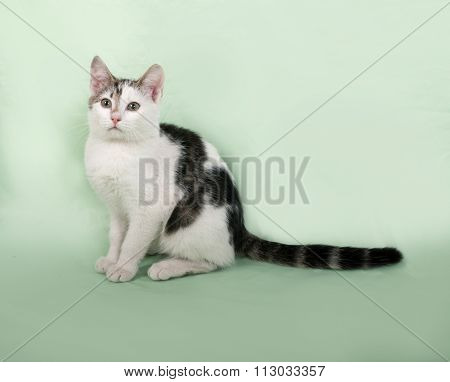 White And Striped Kitten Sitting On Green
