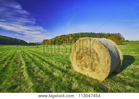 Silage In Meadow