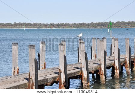 Wooden Pier with Sea Gull