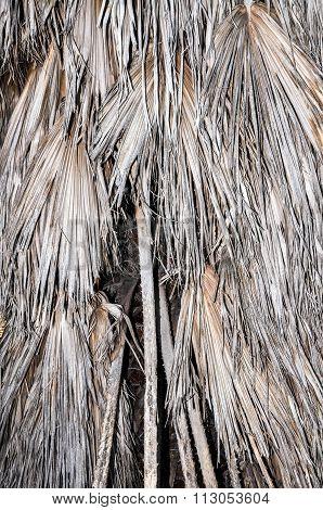 Grassy Tree Detail